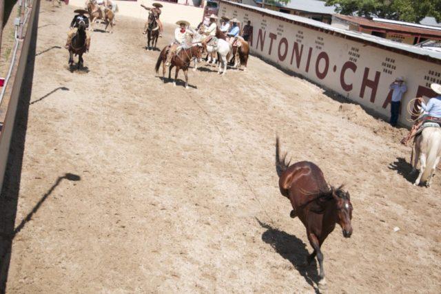 Charreada Day In Old Mexico Fiesta San Antonio-04