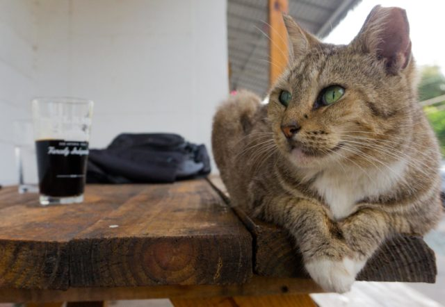 Cat Buddy Attagirl San Antonio Restaurants