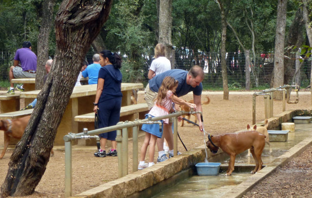 Phil Hardberger Park San Antonio Dog Parks